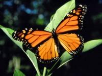 butterflywebimage